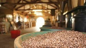 Inside Tanna Coffee Factory