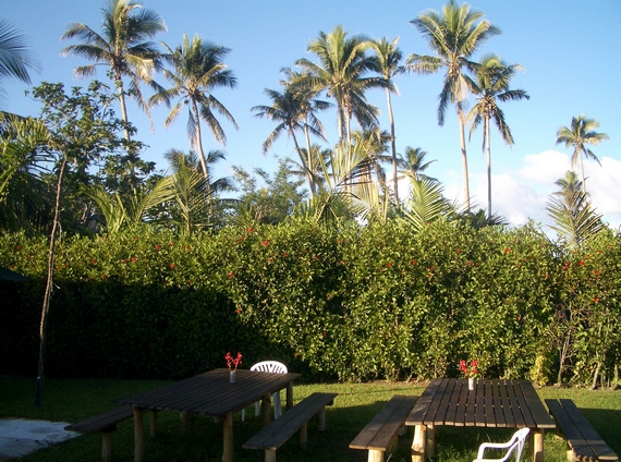 Coconut palms at Port Vila resort